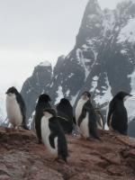 Punk Penguins